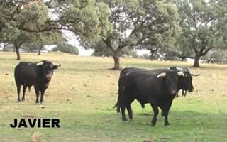 vaca 5